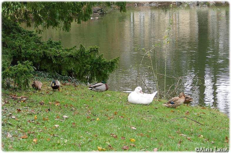 Parc_oberthur_9D_c09_10