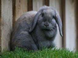 Nick Cave frappe un grand coup avec Mort de Bunny Munro