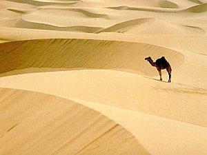 desert_010.jpg