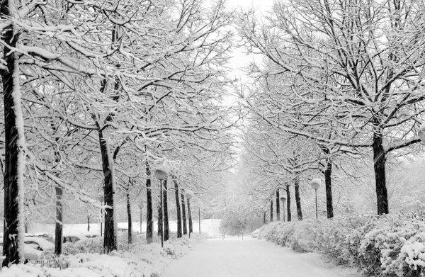 Winter_by_marquis73.jpg
