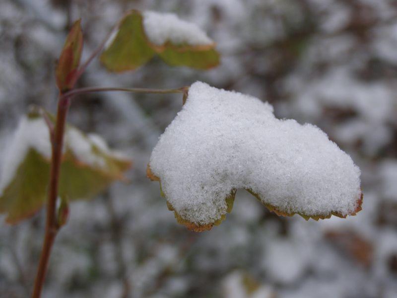 L'hiver  (Pierre Reverdy)