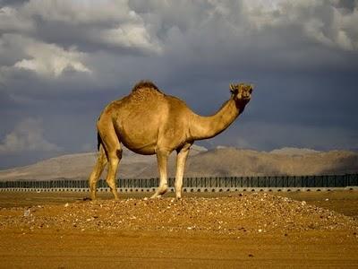 United Arab Emirates - Near the border with Oman