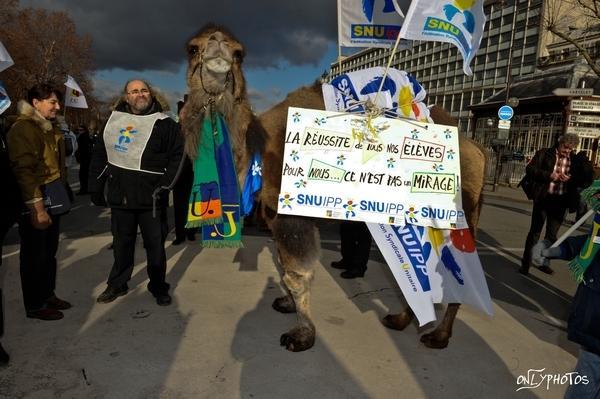manif-enseignants-chameau