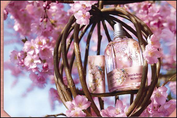 Le printemps arrive … la preuve…