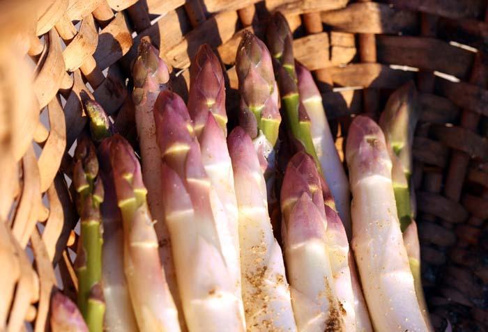 アスパラガス asparagus asparagi asperges espargo
