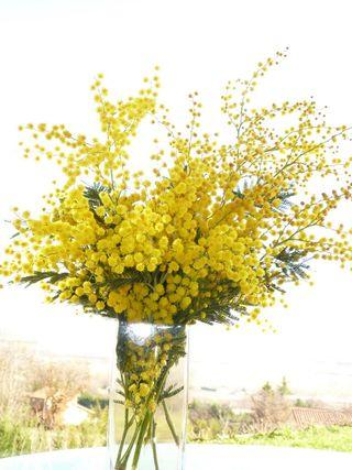 Mimosa-bouquet