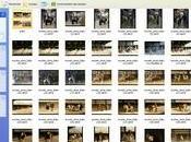 Astuce bien archiver photos