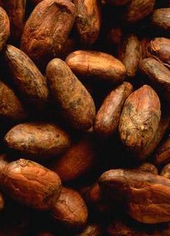 Féves de cacao
