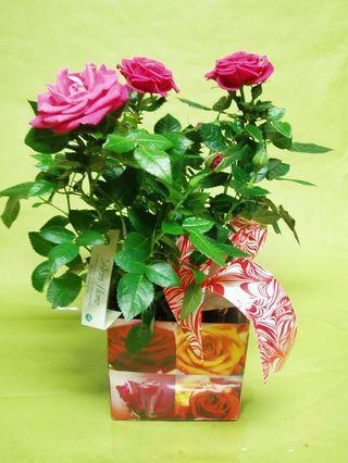 et pourquoi pas une plante pour la st valentin paperblog. Black Bedroom Furniture Sets. Home Design Ideas
