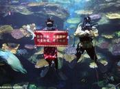 Nouvel Chinois Bangkok tigre dans aquarium