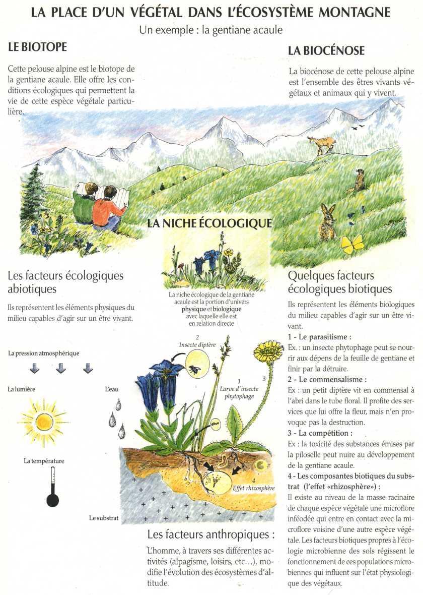 Adaptation et environnement