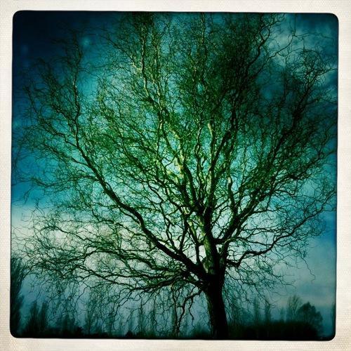 Toujours l'hiver. Poème de Sylvia Plath, intitulé Arbres...