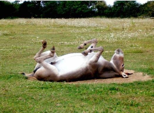Chanson pour un âne mort de mon pays (Edmond Jabès)