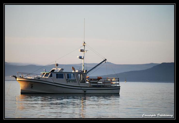 Pêche à l'encornet à Miquelon