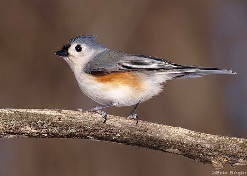 Le petit oiseau de toutes les couleurs d couvrir for Oiseau couleur