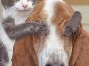 Comme chien chat devant l'Ipad