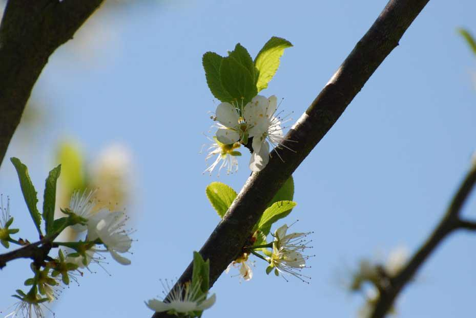 Vois le jardin regaillardi quand le joli printemps fleuri paperblog - Quand ramasser les potimarrons ...