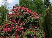 Jardins couleurs Normandie