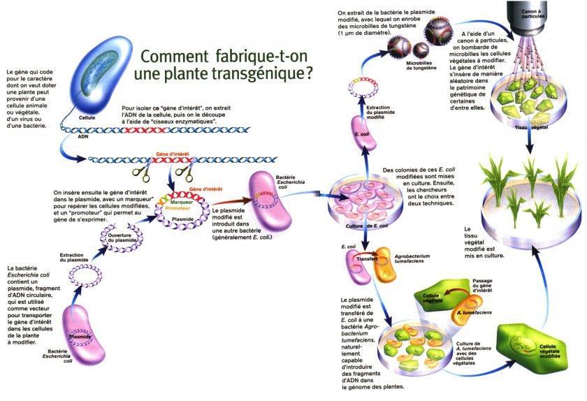 Le traitement du microorganisme végétal sur les ongles par lail