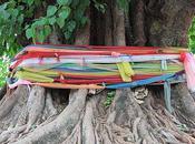 Thaïlande arbres sacrés.