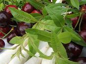 Ragoût cerises verveine clafoutis