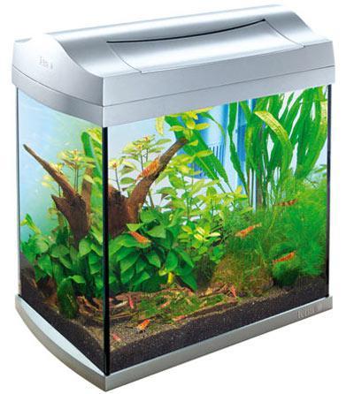la crevette d aquarium 192 voir
