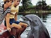 Flipper dauphin