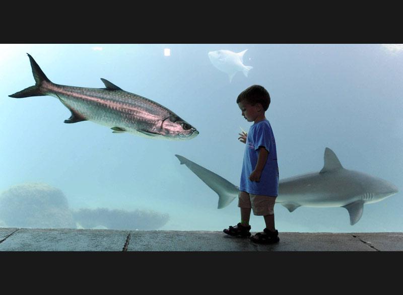 Marcher à coté des poissons, un joli rêve d'enfant ! Celui-ci a pu le réaliser à l'occasion d'une visite à l'aquarium de l'Atlantide de Nassau, aux Bahamas.