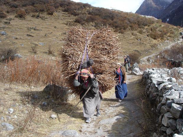 Femmes portant du bois, Népal