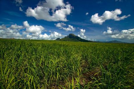 L'industrie biosourcée : $ 230 milliards d'ici 2020