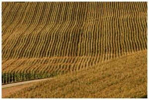 La Chine mise aussi sur le biocarburant cellulosique