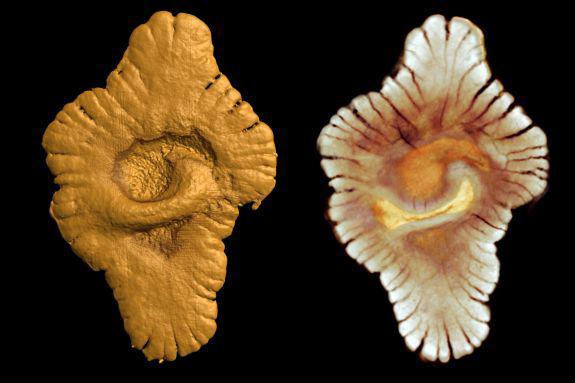 fossiles de vie multicellulaires