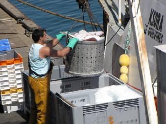 100704 Déchargement poissons.jpg