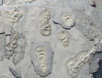Un géologue marocain découvre le plus vieux fossile du monde