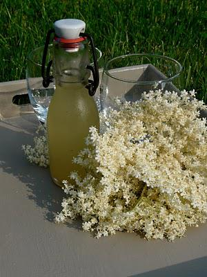 Les fleurs de sureau pour parfumer une panna cotta et son granité et du sirop à savourer toute l'année