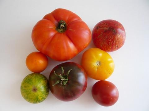 tomates_tplf_ete.jpg