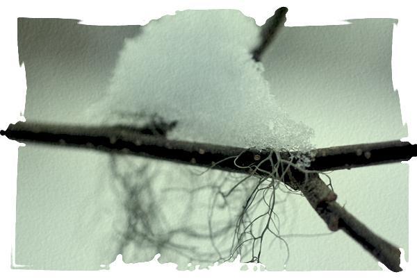 lichen-neige-estonie.jpg