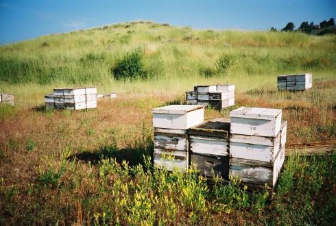 Abeilles, biodiversité et apiculture