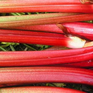 La rhubarbe : acidulée, savoureuse et bonne pour la santé