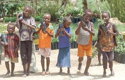 France Line plante 20 arbres en Afrique!
