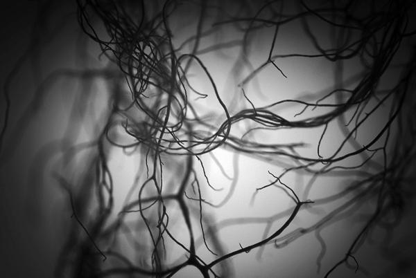 tentacules.jpg