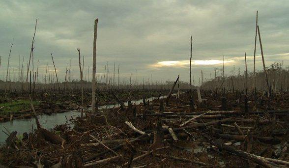 Sinar Mas détruit les forêts tropicales indonésiennes pour produire du papier