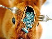 Antibiotiques dans l'élevage animal l'Agence sécurité sanitaire américaine tire sonnette d'alarme