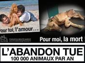 L'abandon animaux