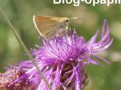 papillons apprécient goût nectar