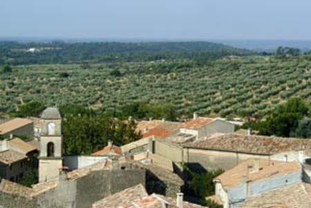 L'or vert des Alpilles, l'autre nom de l'huile d'olive