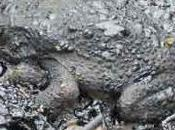 marée noire peut cacher autre