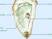 L'huître, produit