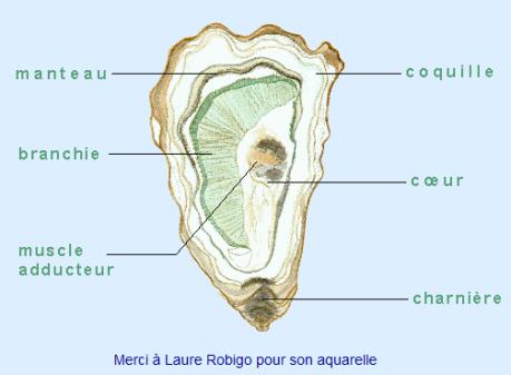 L 39 hu tre un pur produit de la mer paperblog for Interieur huitre