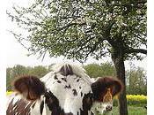 Malaise autour l'augmentation prix lait